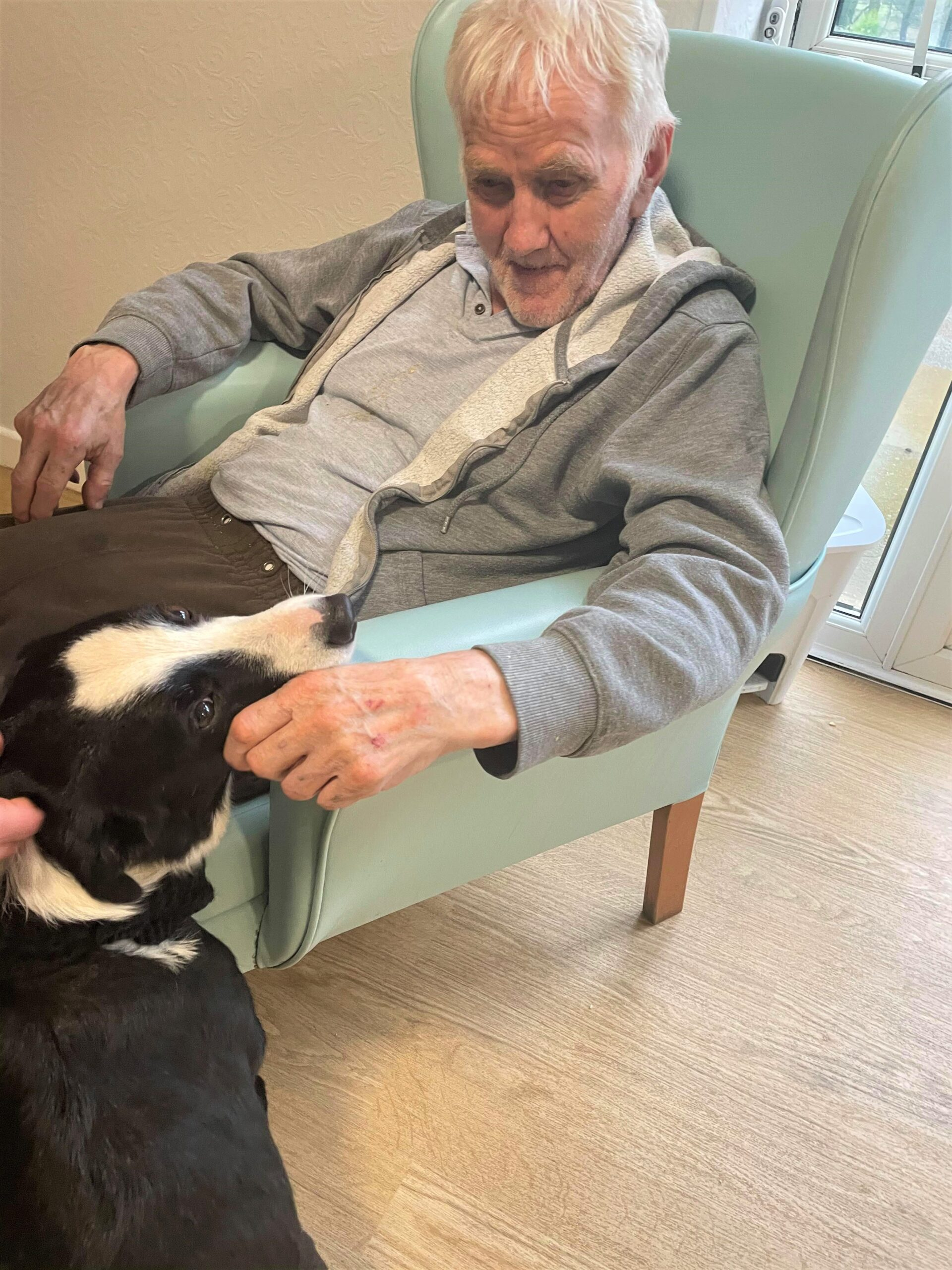 Pet therapy helps mental health